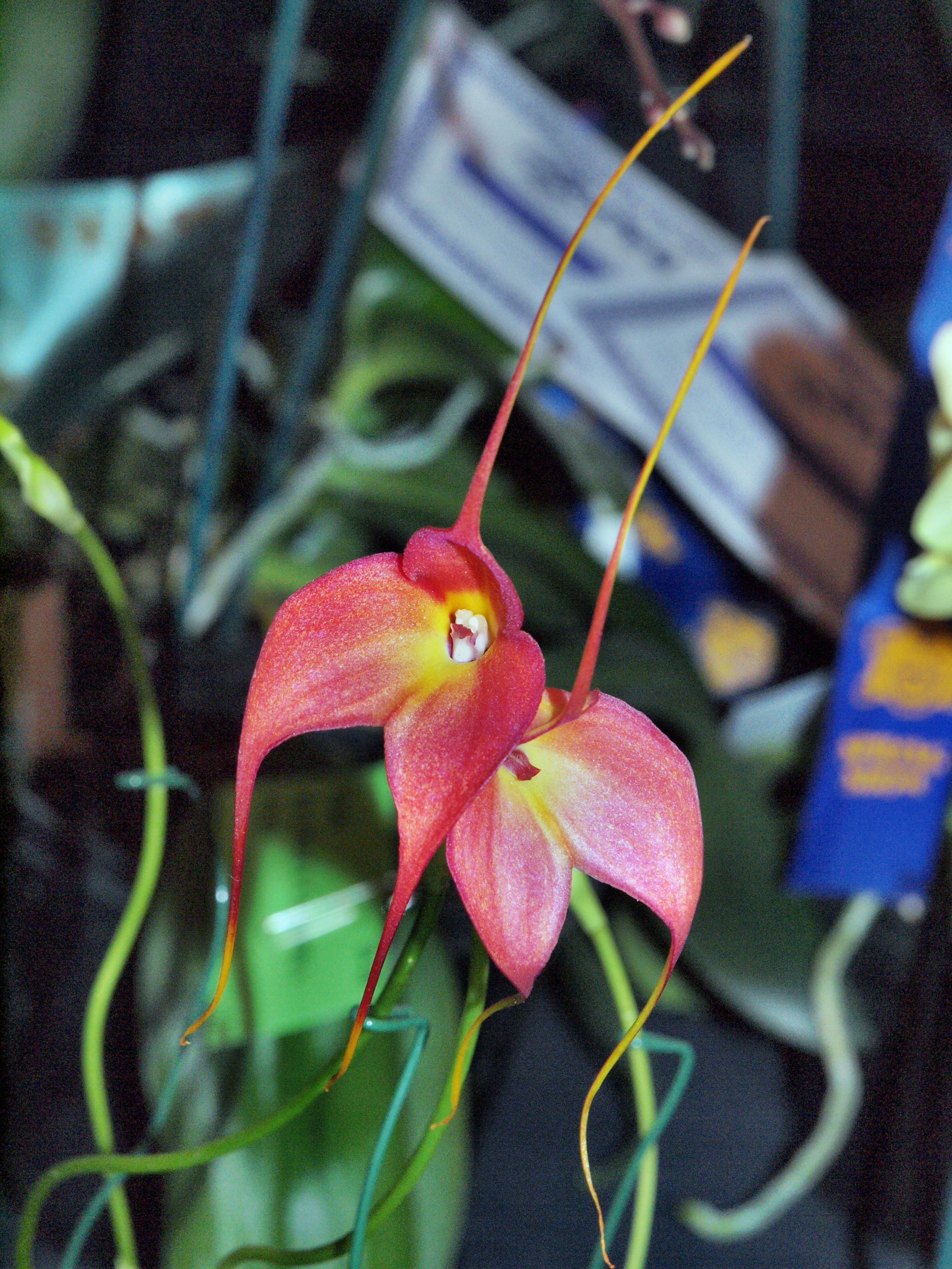 Orchid-27.jpeg