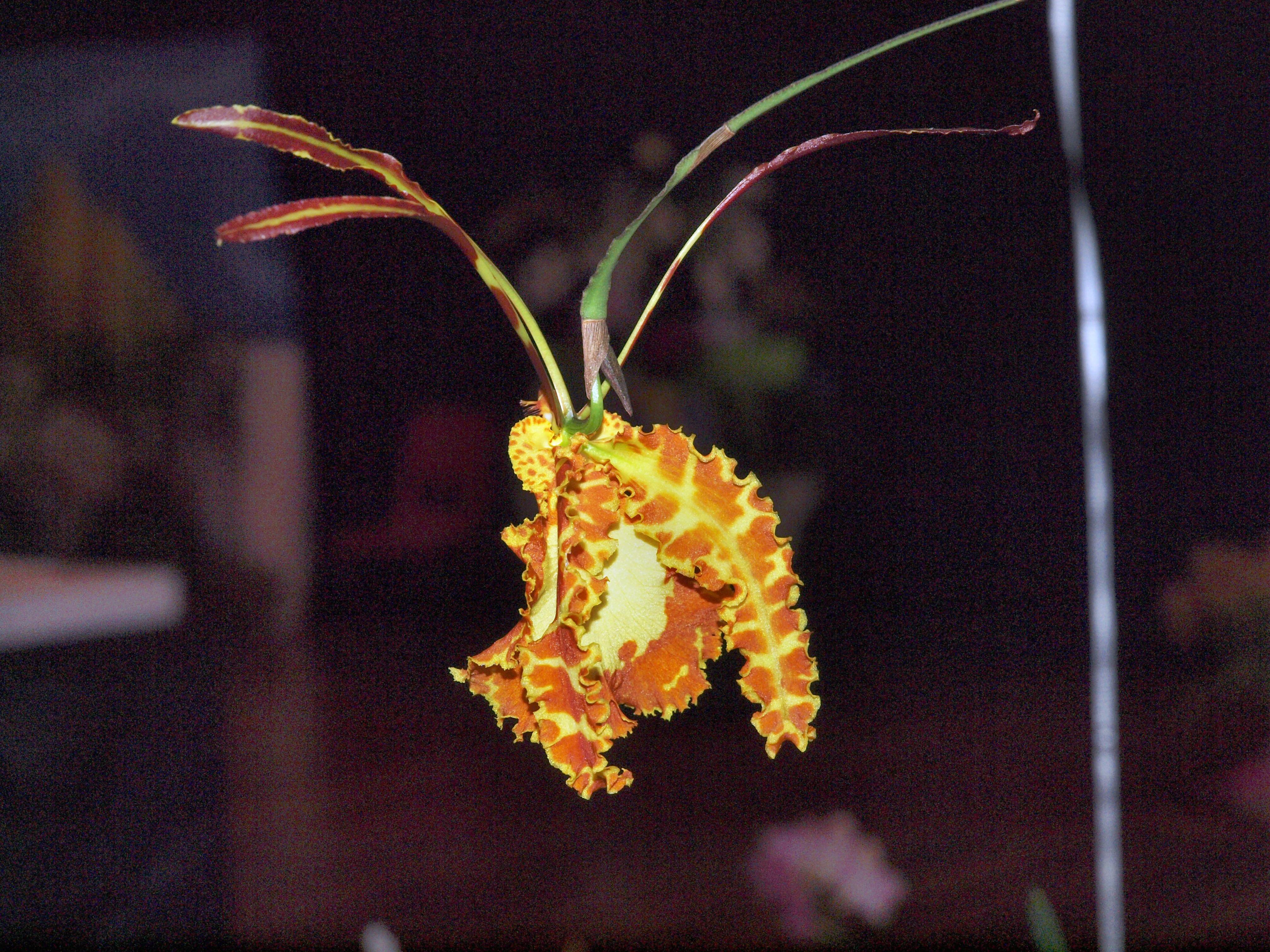 Orchid-30.jpeg