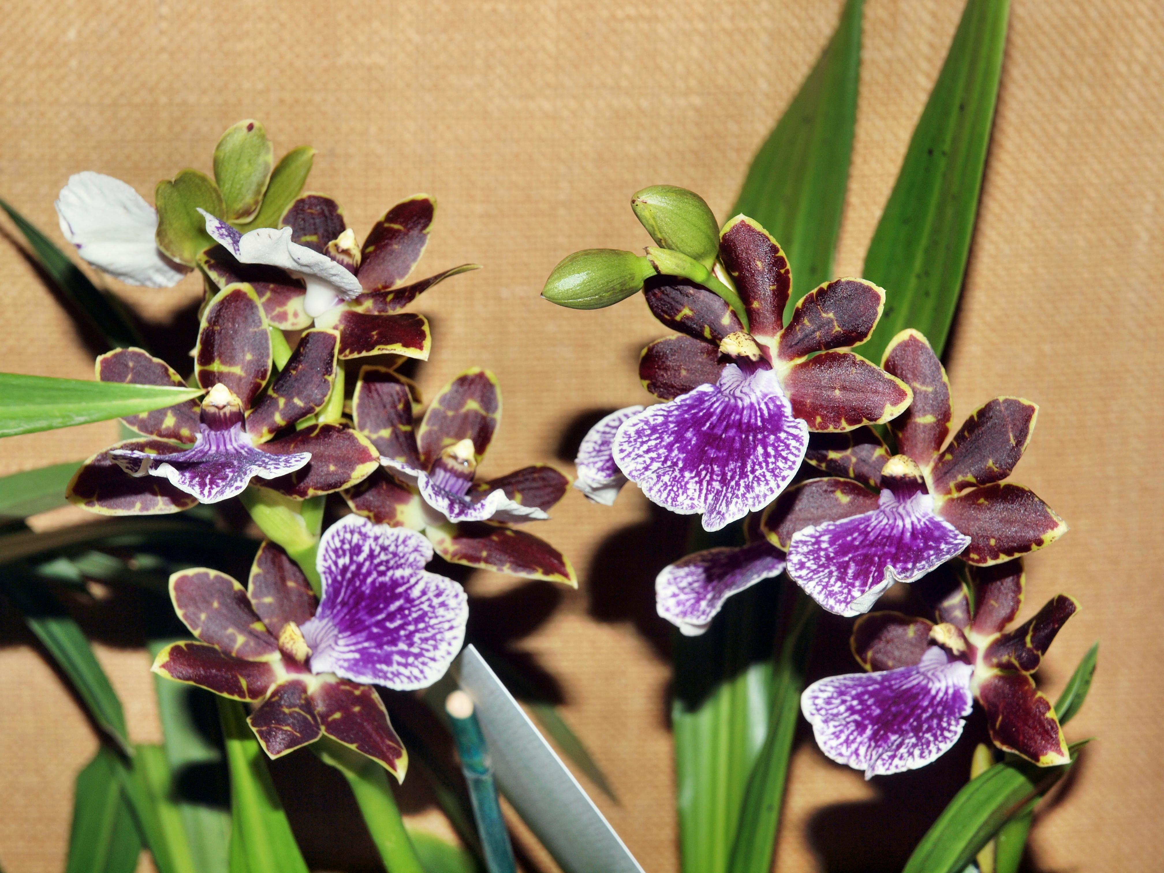 Orchid-37.jpeg