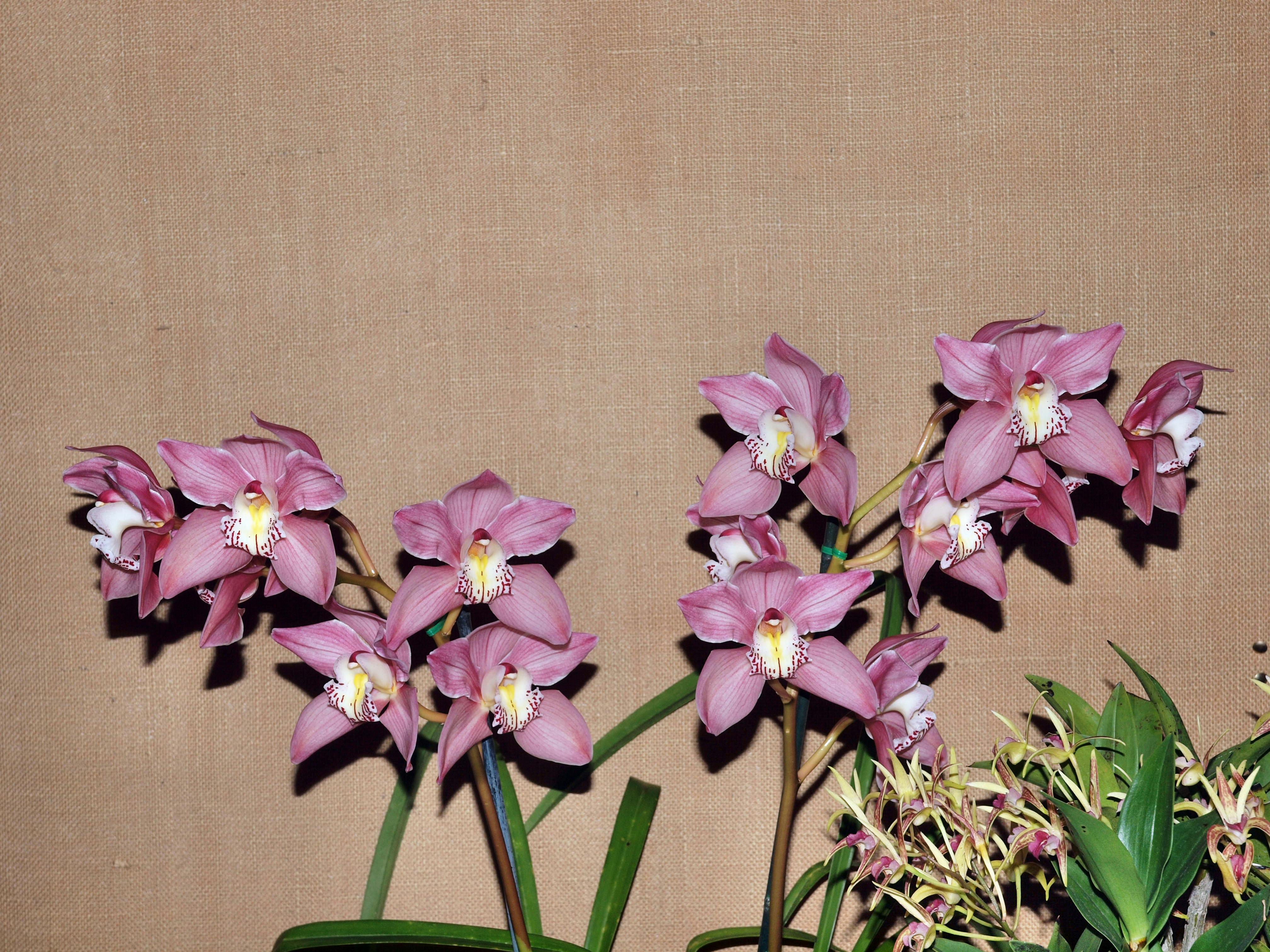 Orchid-38.jpeg
