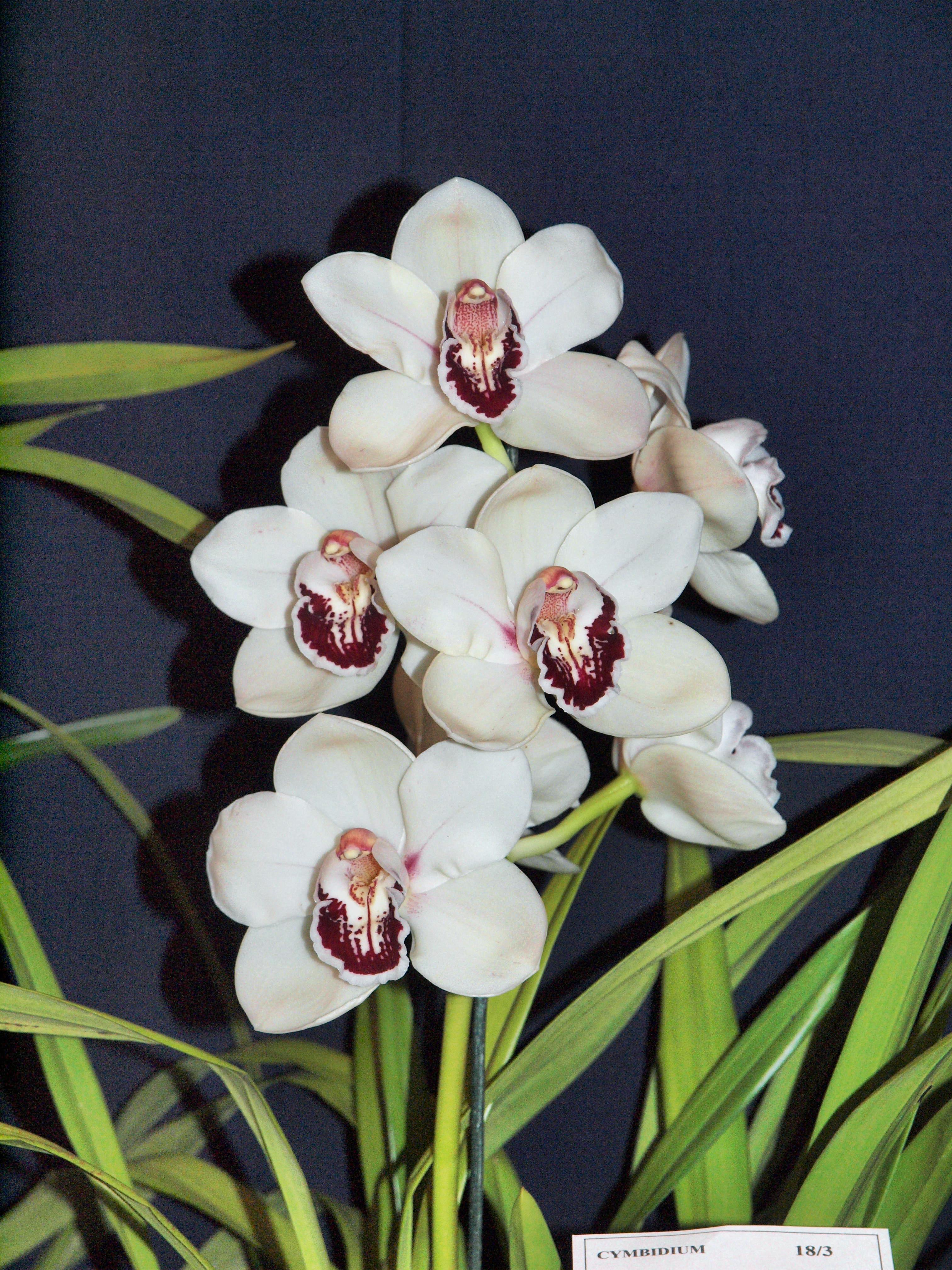 Orchid-4.jpeg