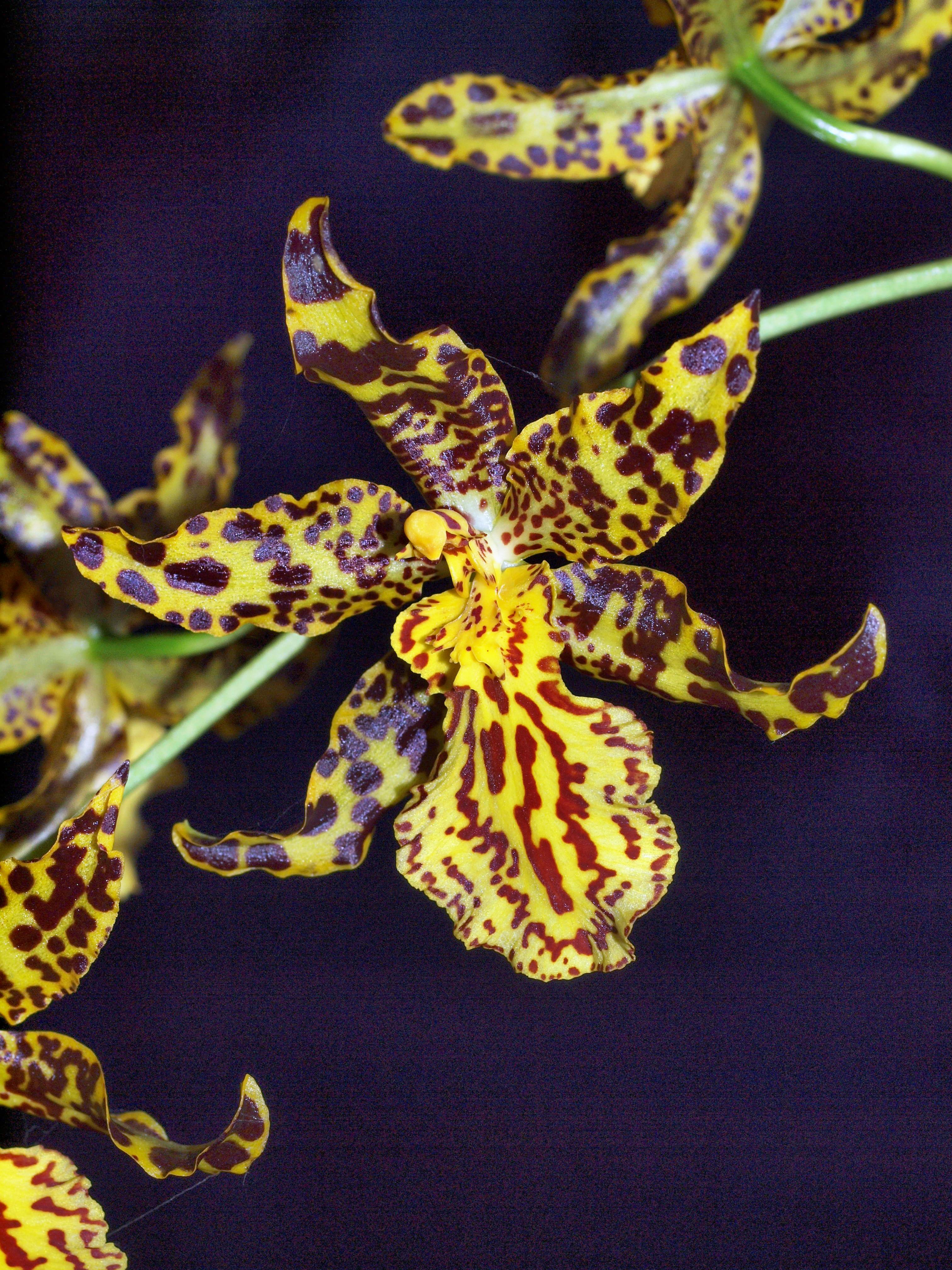 Orchid-45.jpeg