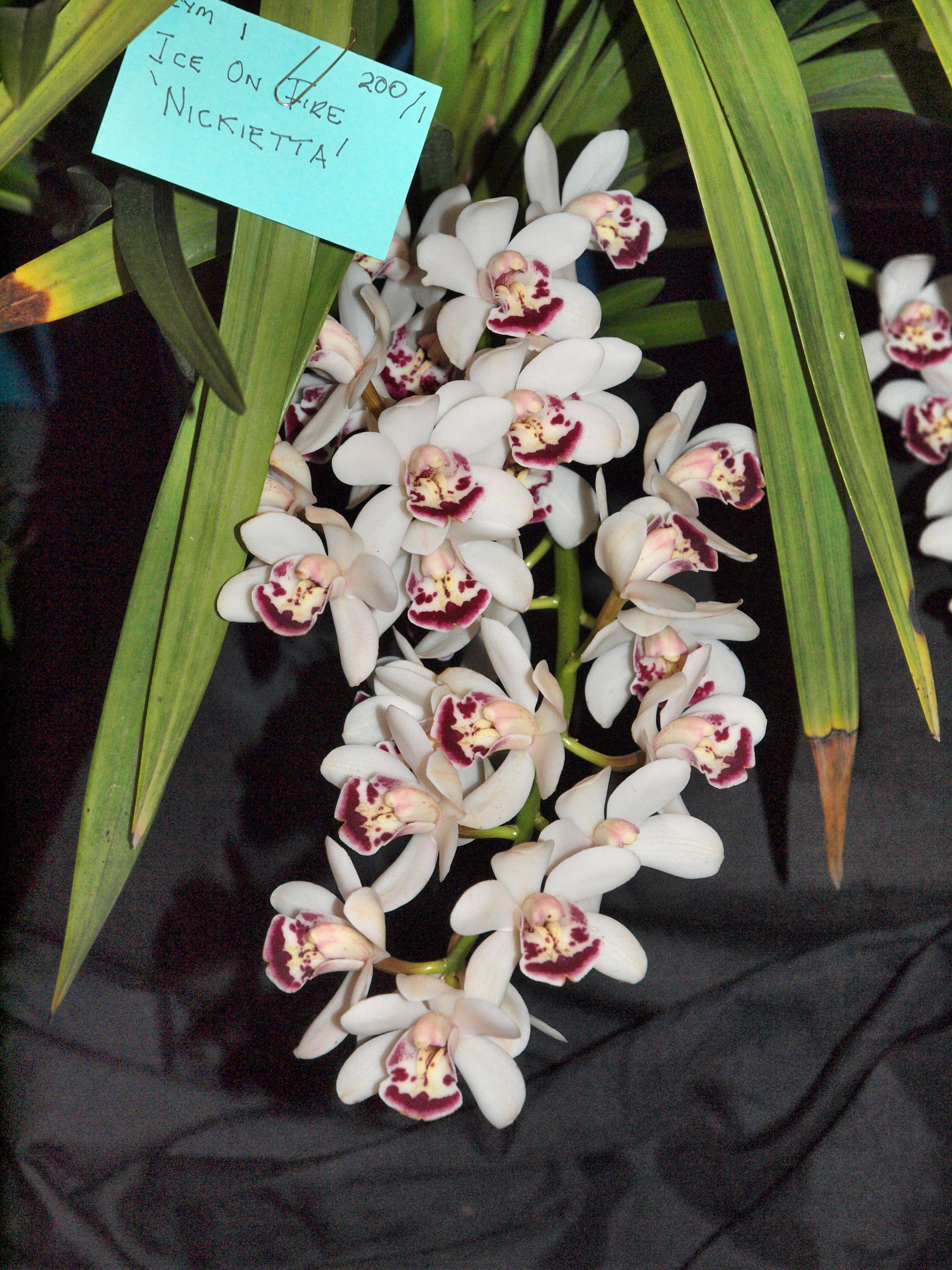 Orchid-8.jpeg
