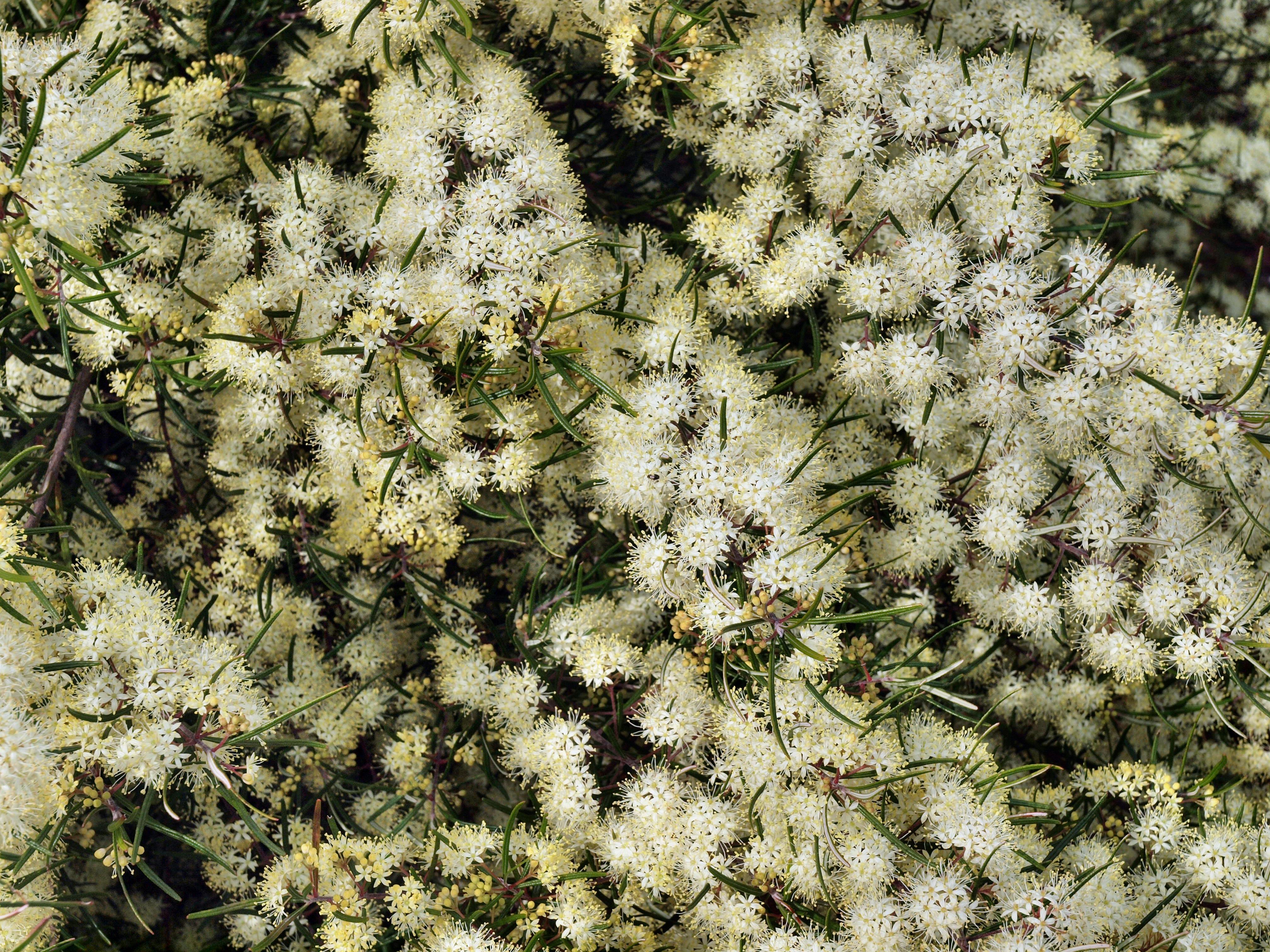 Wildflower-11.jpeg