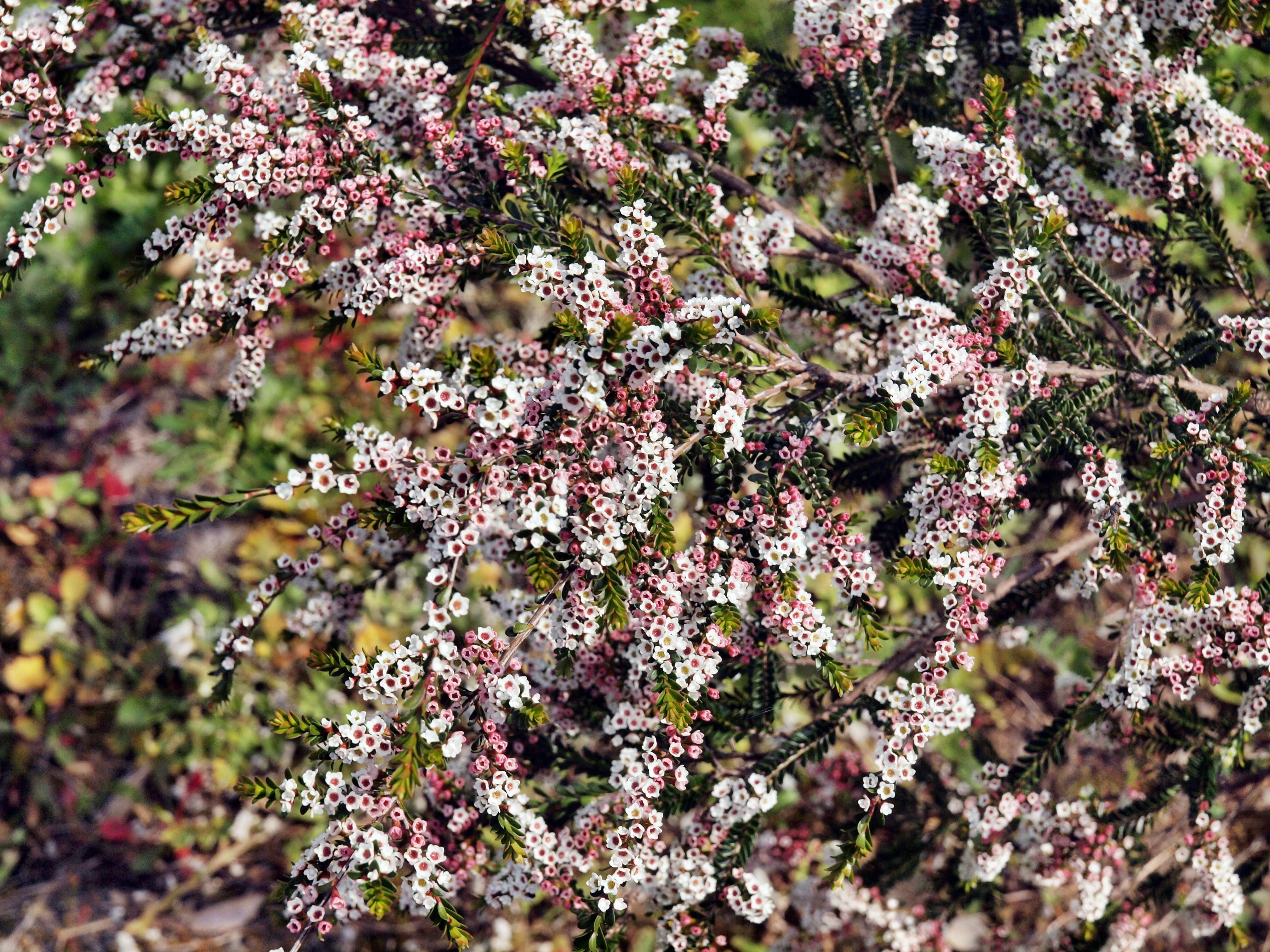 Wildflower-4.jpeg