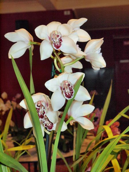 Orchid-1.jpeg
