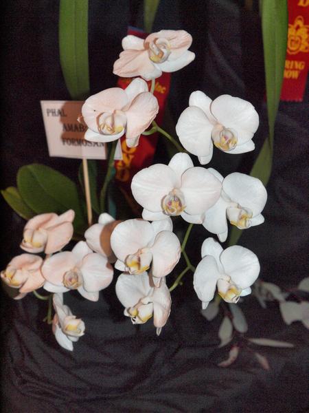 Orchid-10.jpeg