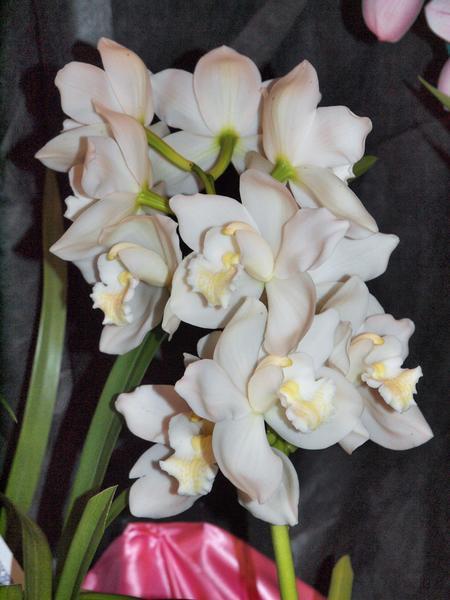 Orchid-12.jpeg