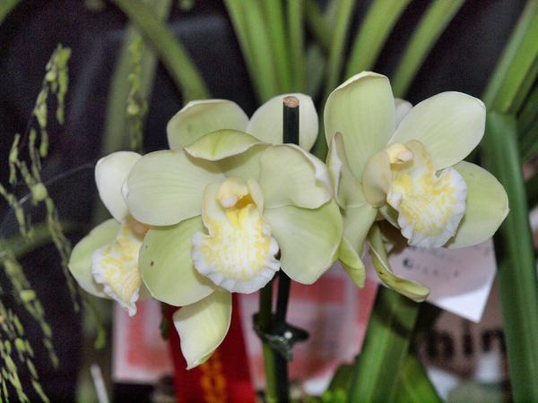 Orchid-14.jpeg