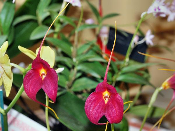 Orchid-16.jpeg