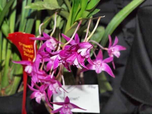 Orchid-19.jpeg