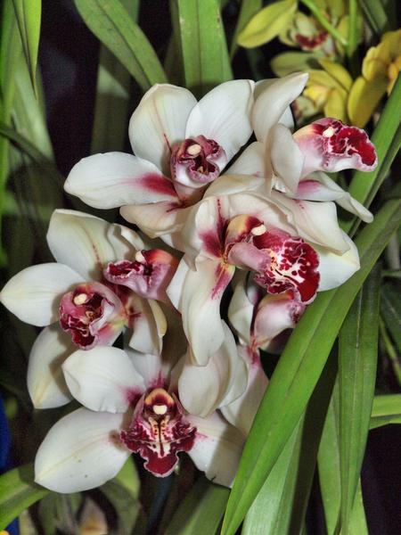 Orchid-21.jpeg