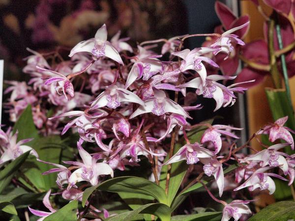 Orchid-22.jpeg