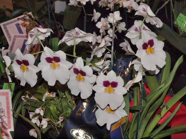 Orchid-24.jpeg