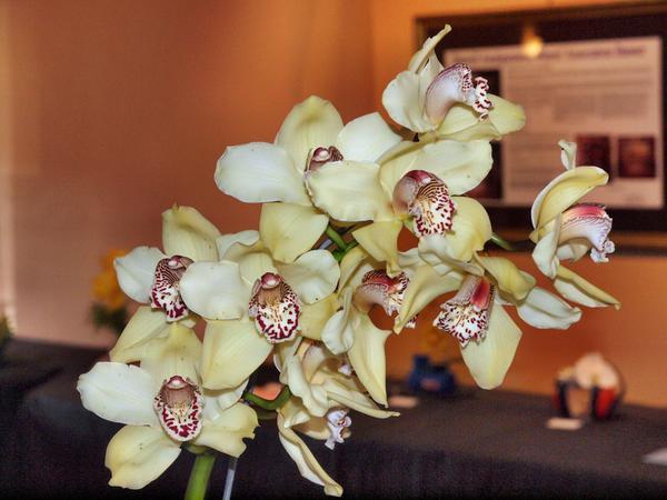 Orchid-3.jpeg