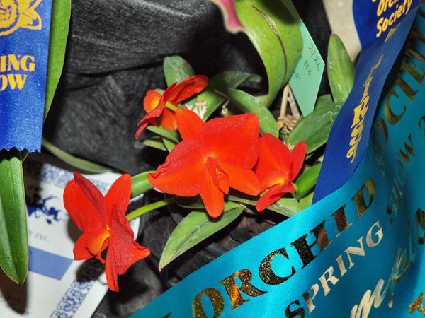 Orchid-32.jpeg