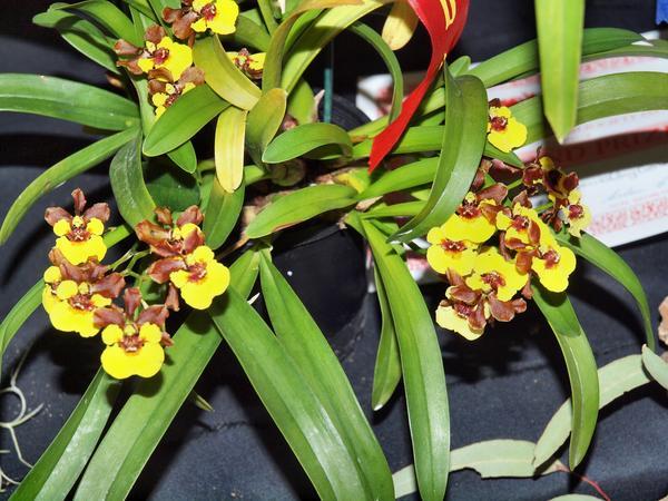 Orchid-36.jpeg