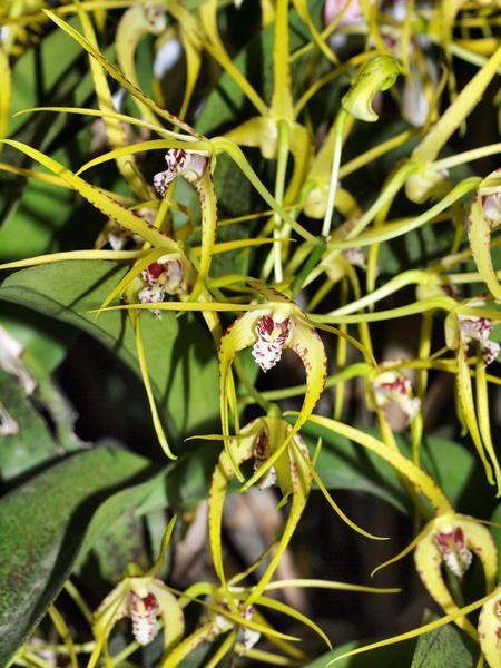 Orchid-40.jpeg
