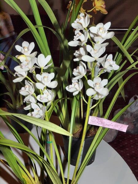 Orchid-46.jpeg
