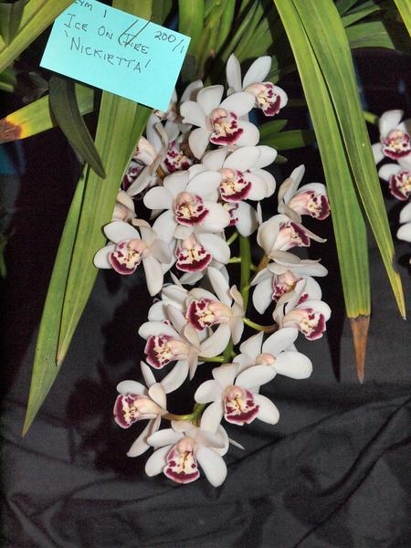 Orchid-8.jpeg