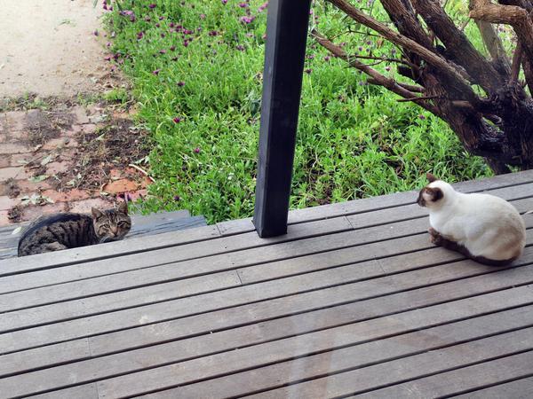 Cat-and-Piccola.jpeg