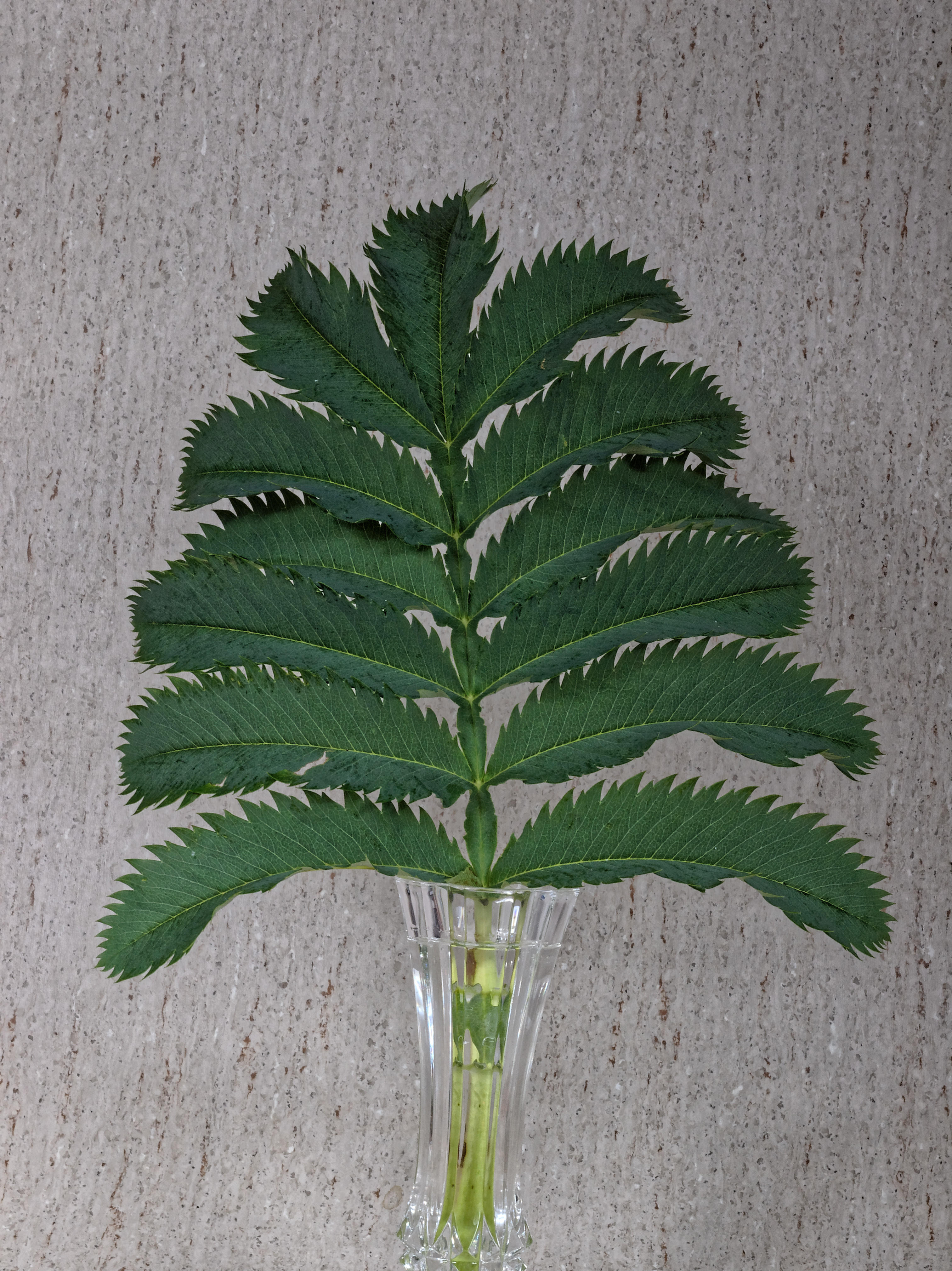 Mystery-plant-2.jpeg