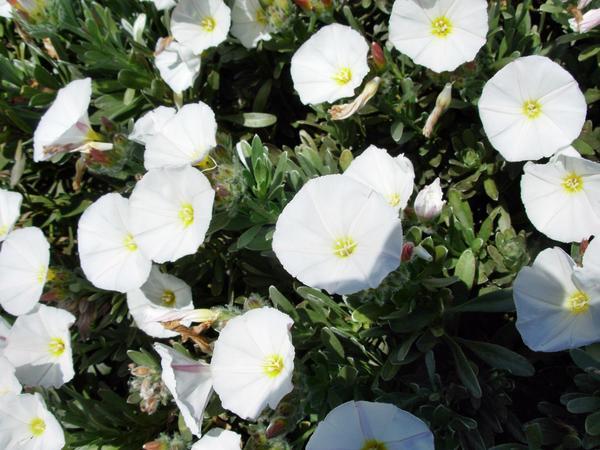 Flowers-3.jpeg