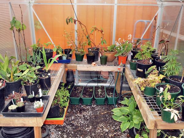 Greenhouse-2.jpeg