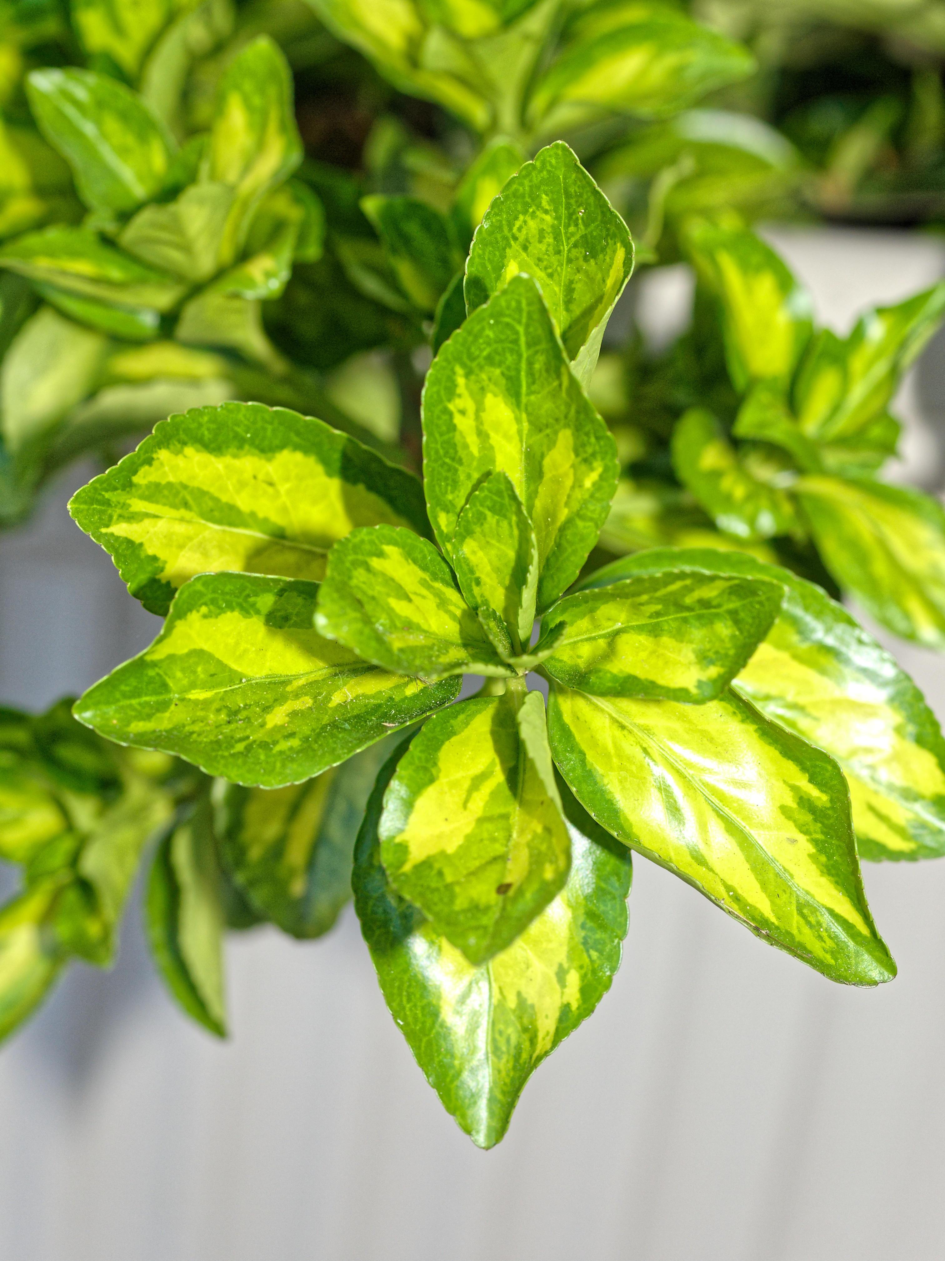 Mystery-plant-1-3.jpeg
