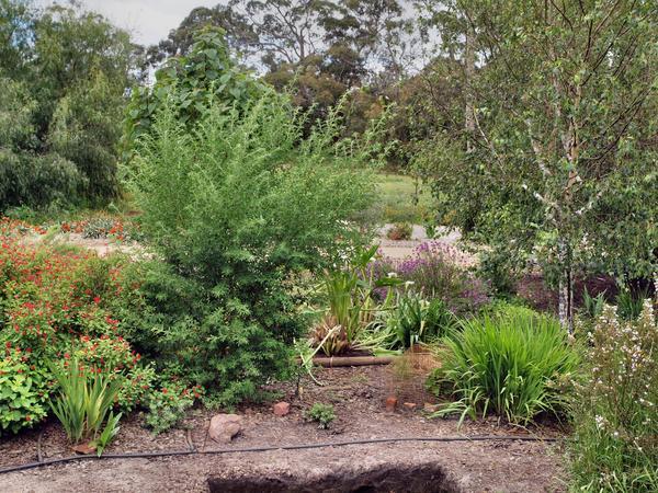 Garden-before.jpeg
