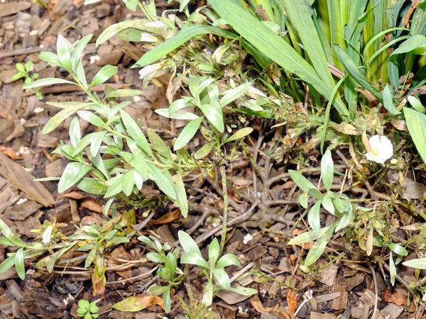 Mystery-Euphorbia-1.jpeg