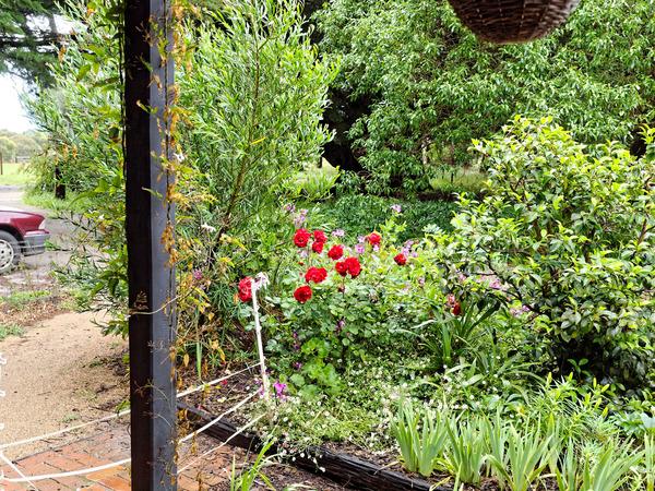 North-garden-before-1.jpeg
