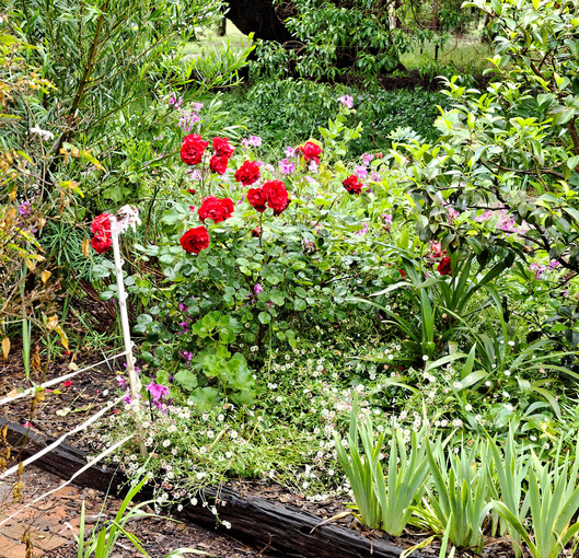 North-garden-before-detail-1.jpeg