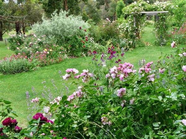 garden-minerne-in-early-dec.-2010-003.jpeg