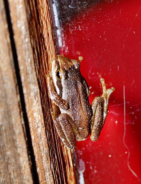 Frog-5.jpeg