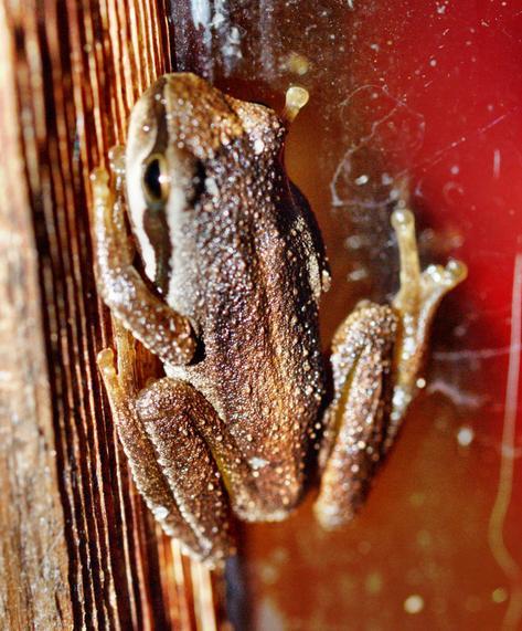 Frog-6.jpeg