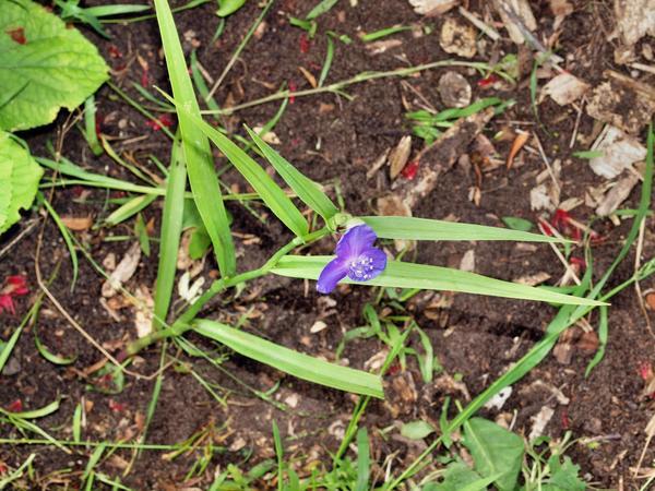 Mystery-flower-3.jpeg