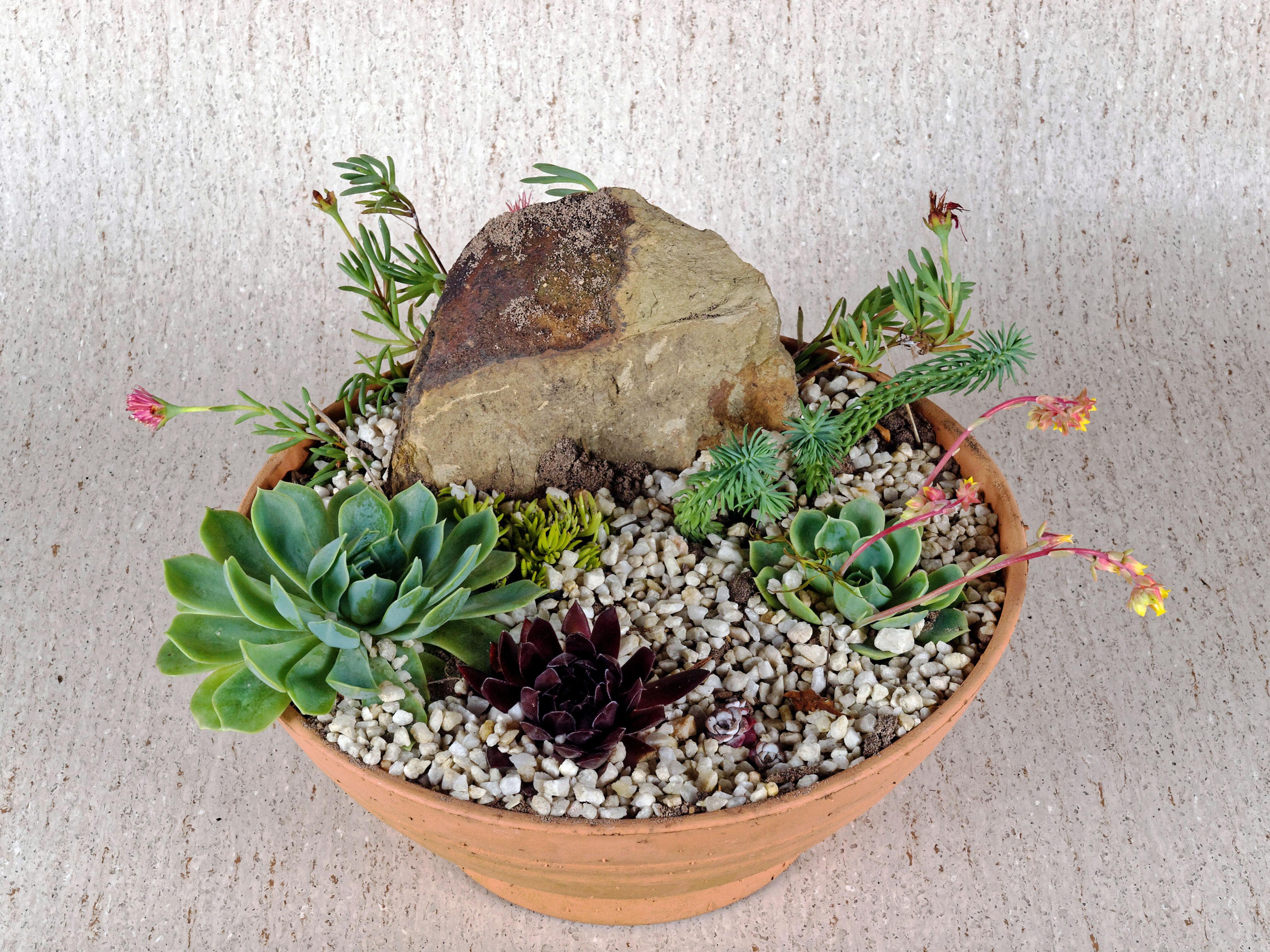 Succulent-garden-1.jpeg