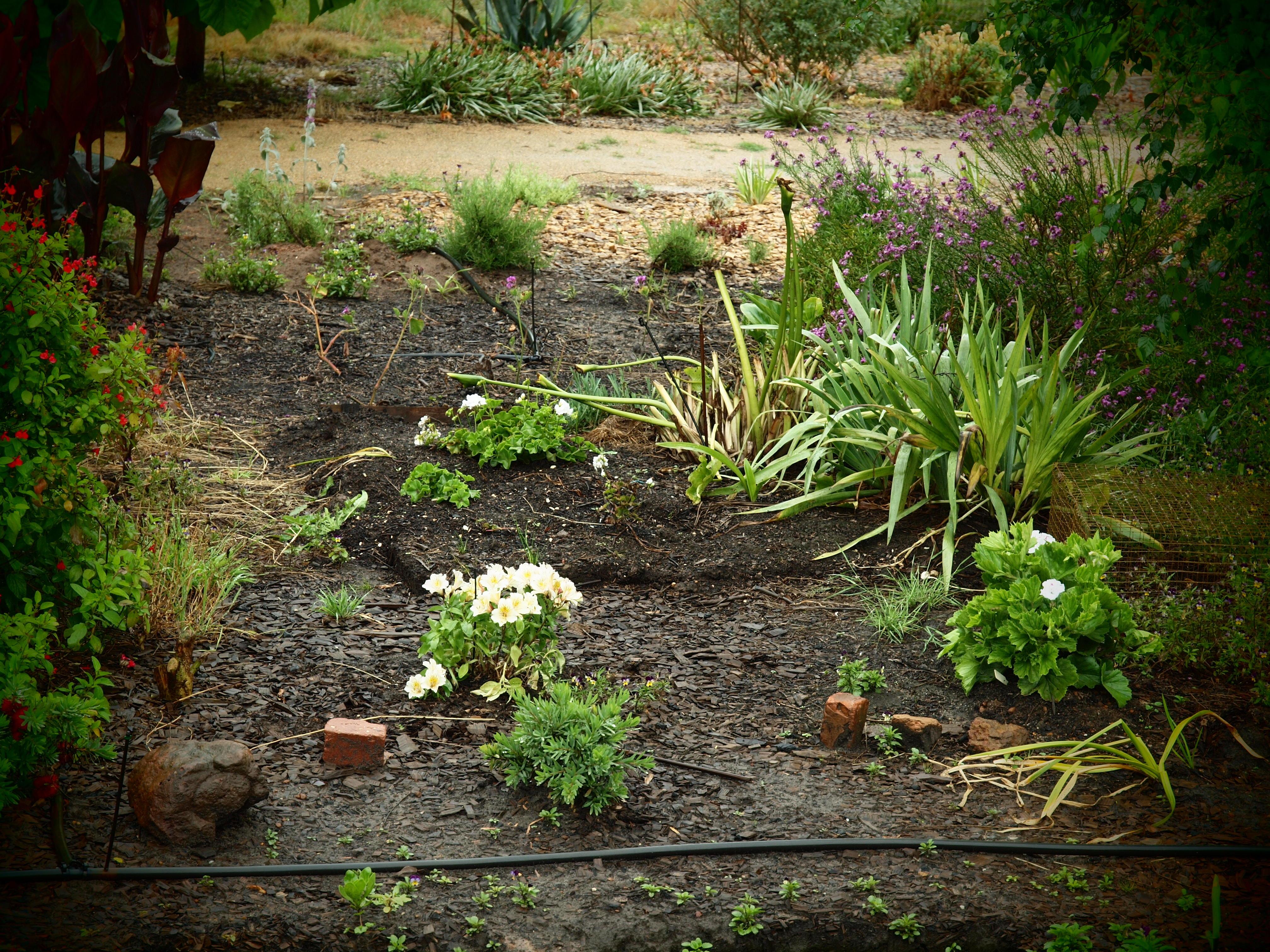 Garden-pinhole.jpeg