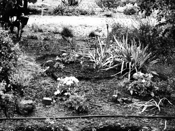 Garden-grainy.jpeg