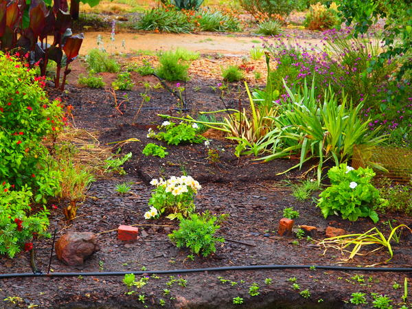 Garden-pop-art.jpeg