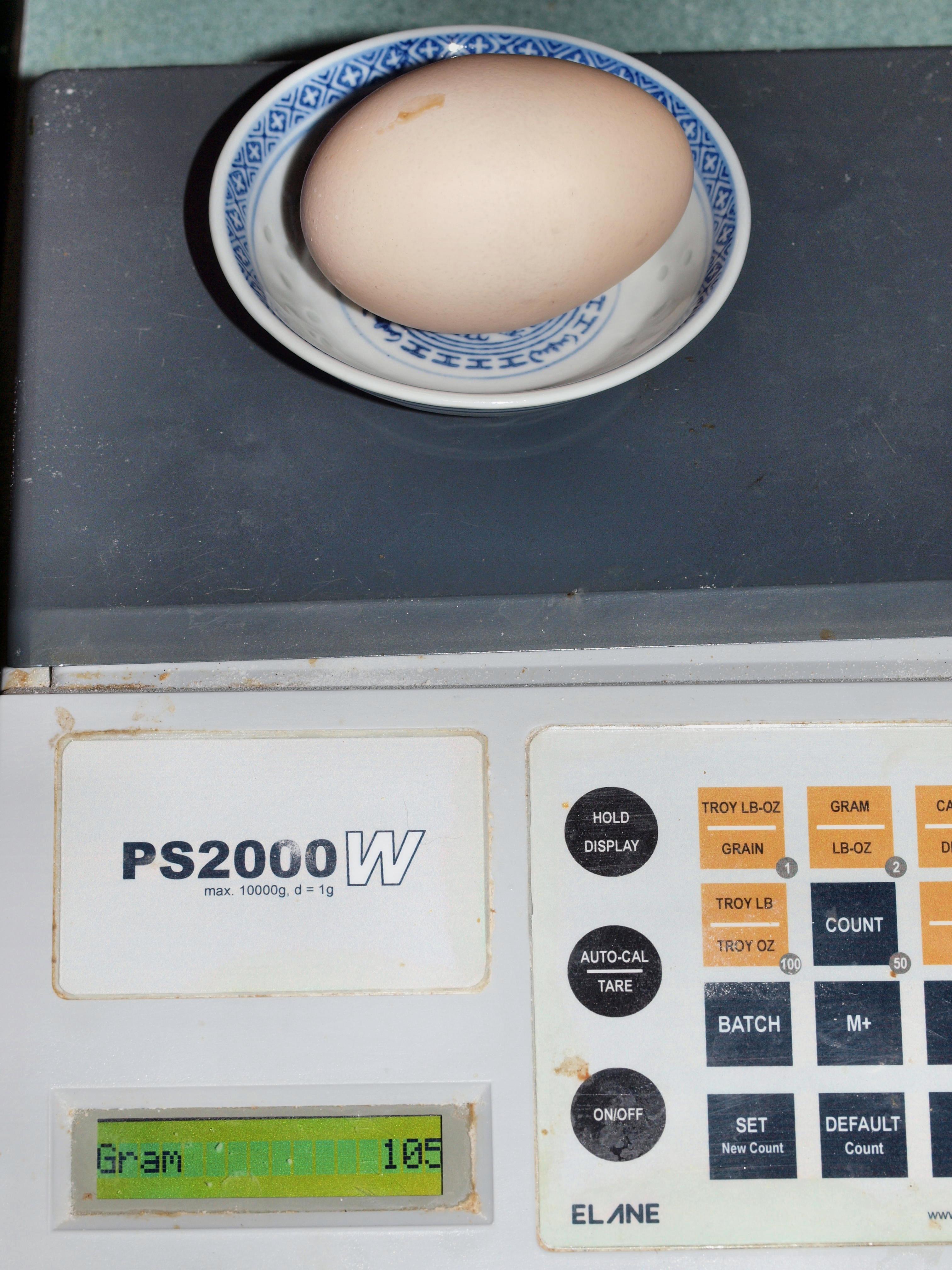 Egg-1.jpeg