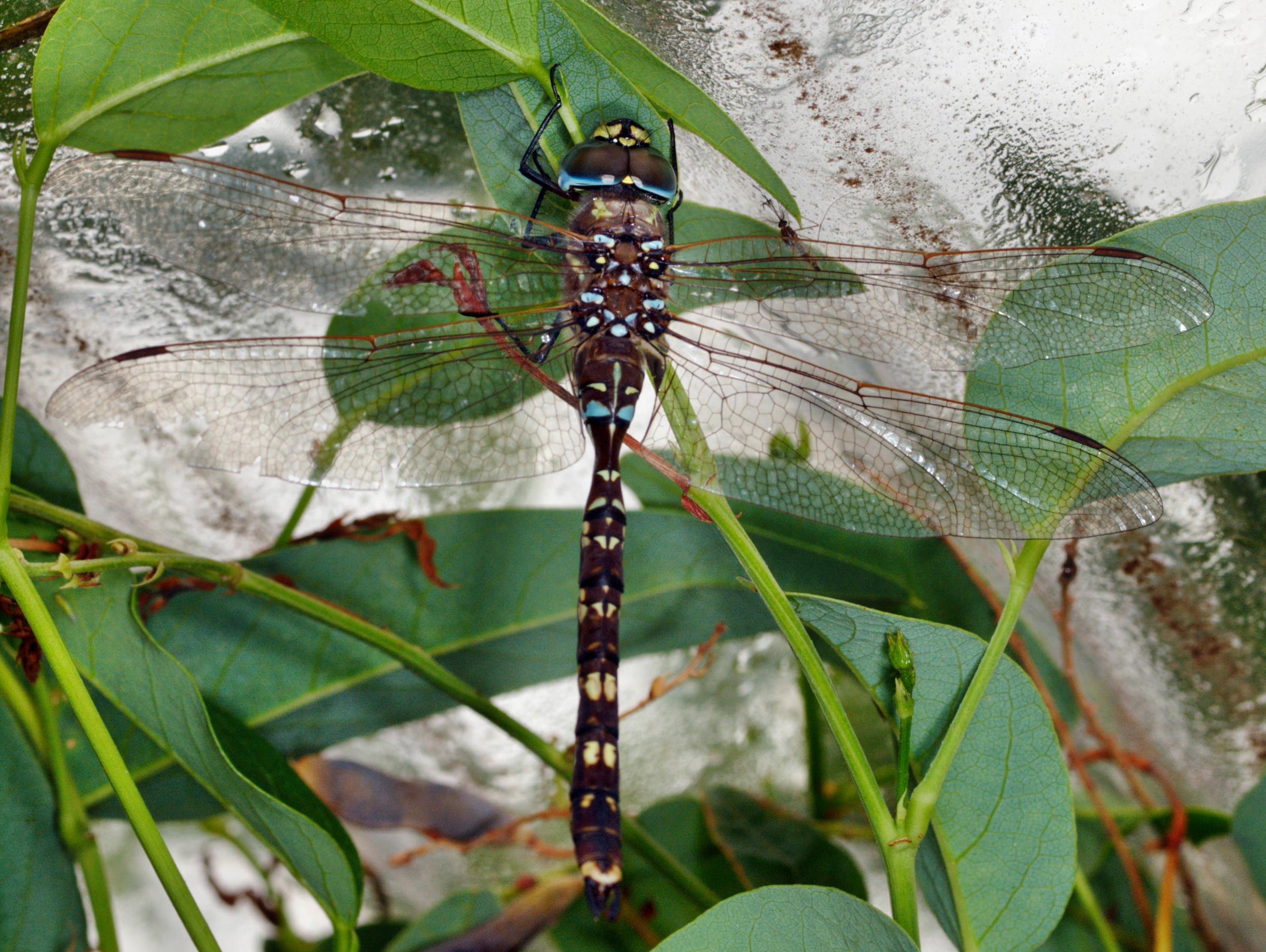 Dragonfly-2.jpeg