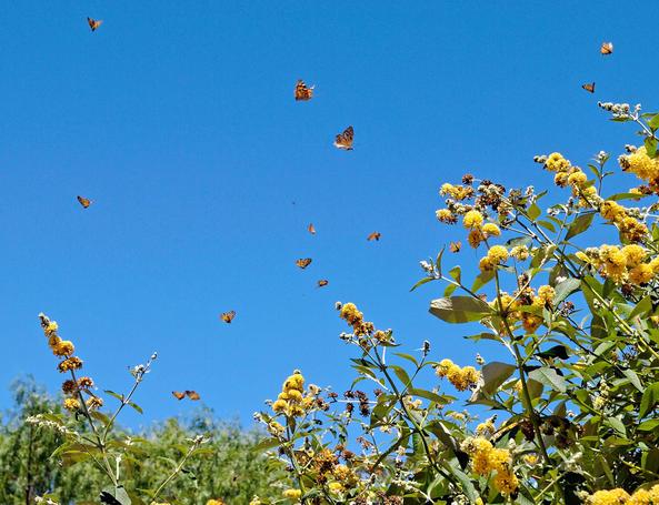 Butterflies-2-detail.jpeg