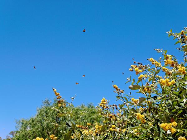 Butterflies-3.jpeg