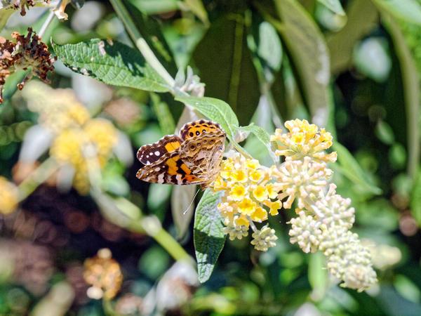 Butterflies-7.jpeg