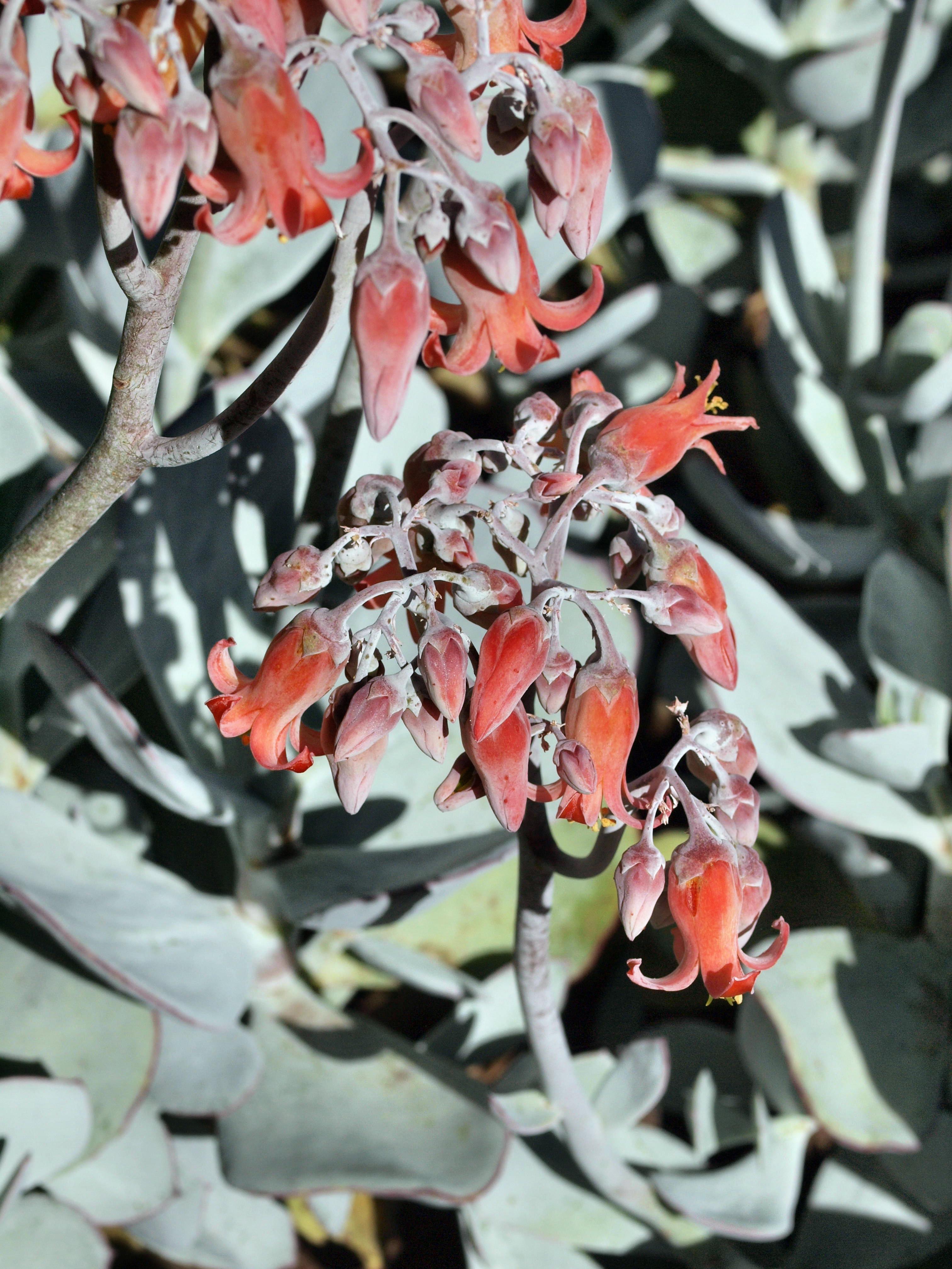 Succulent-flower-6.jpeg