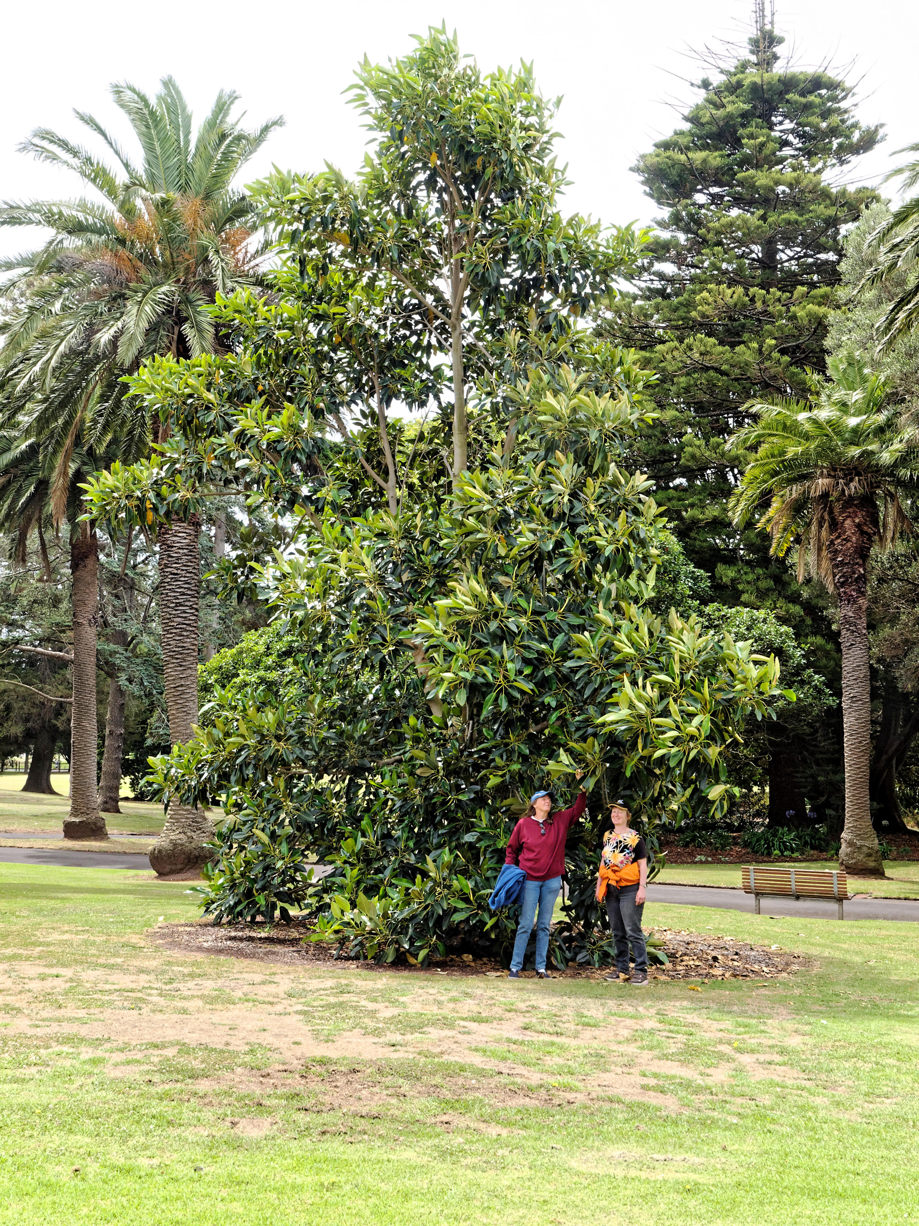 Botanic-Gardens-4.jpeg