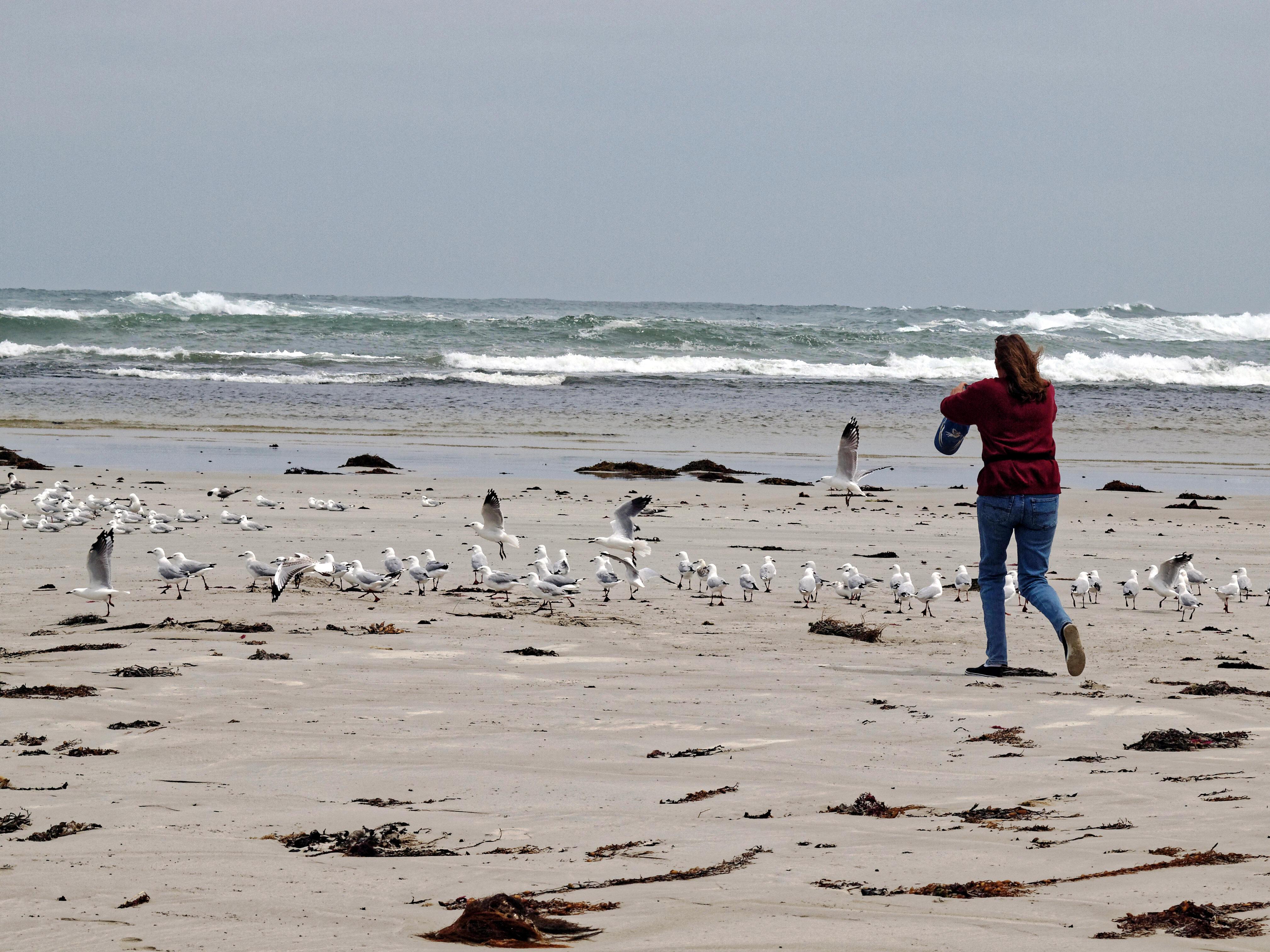 Yvonne-Seagulls-6.jpeg