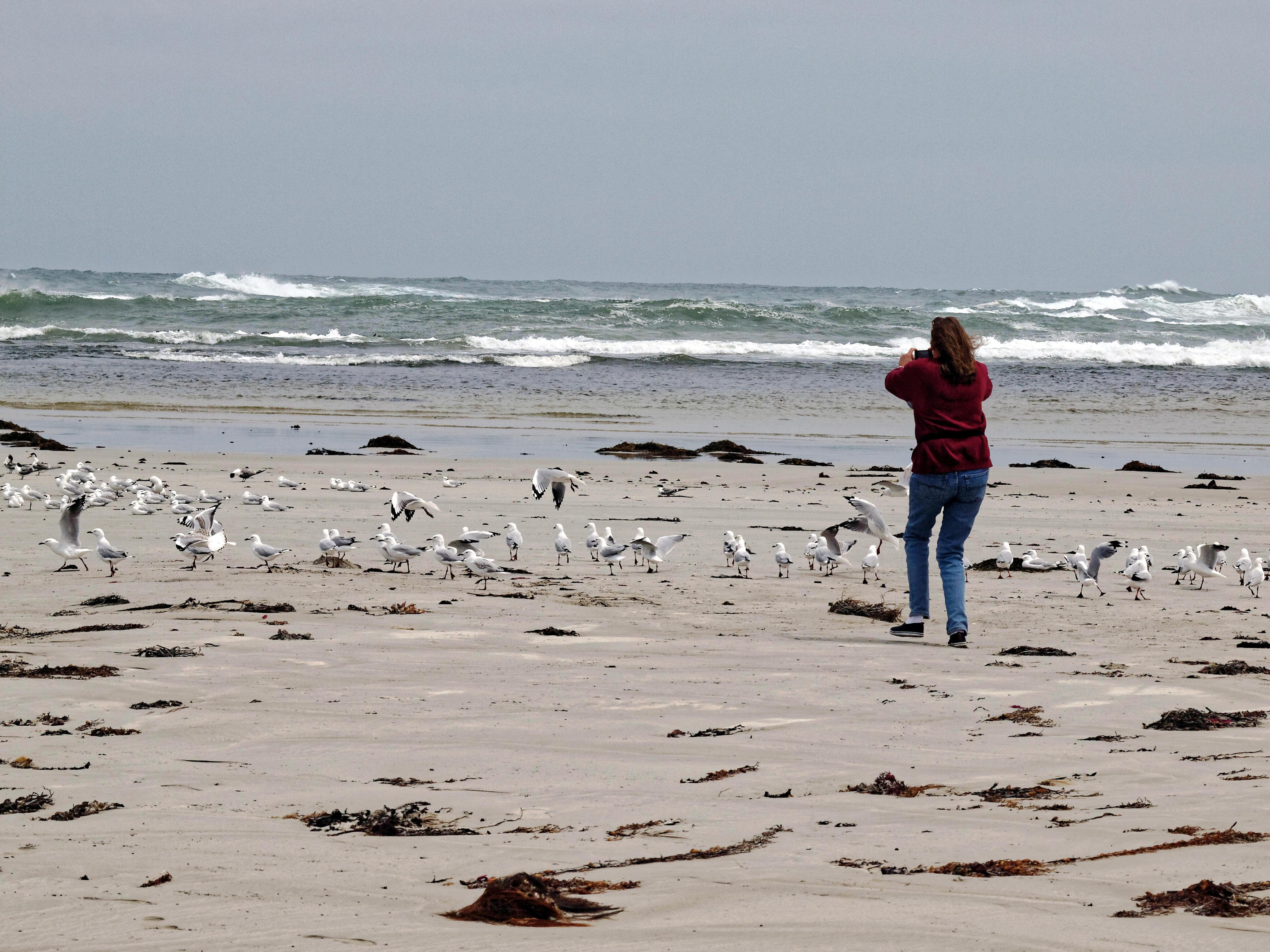 Yvonne-Seagulls-7.jpeg